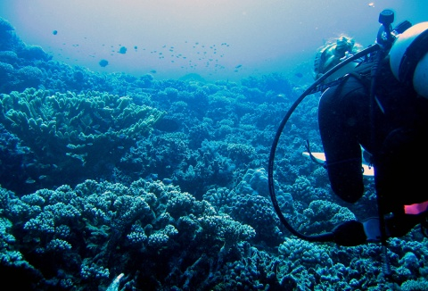 Cori Kane conducts fish surveys on Moorea's coral reefs
